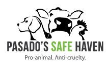 Pasado's Safe Haven