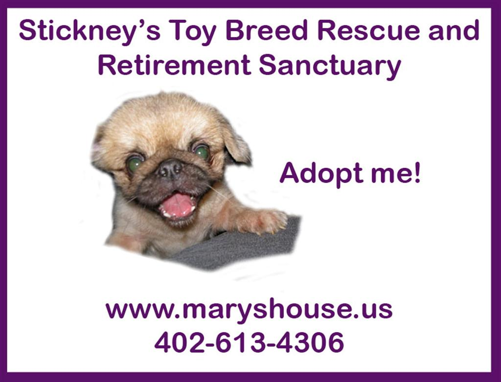 Stickneys Toy Breed Rescue