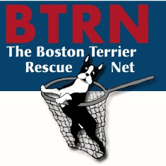 Boston Terrier Rescue Net