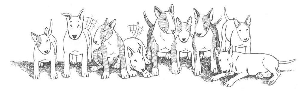 Bull Terrier Rescue, Inc.