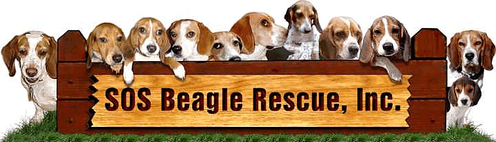 SOS Beagle Rescue Inc.